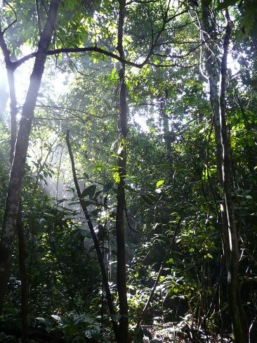 4borneosupuforest
