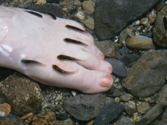 5borneotiereknabberfische