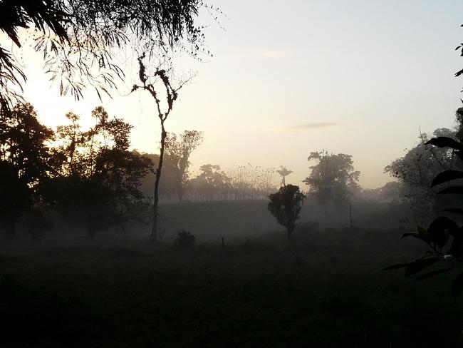 1morgennebel