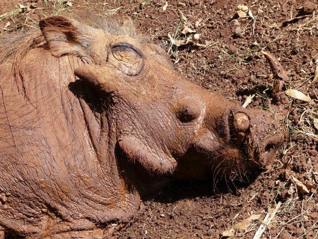 2bwarzenschweinorphanage