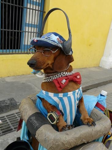 1averrueckterhund