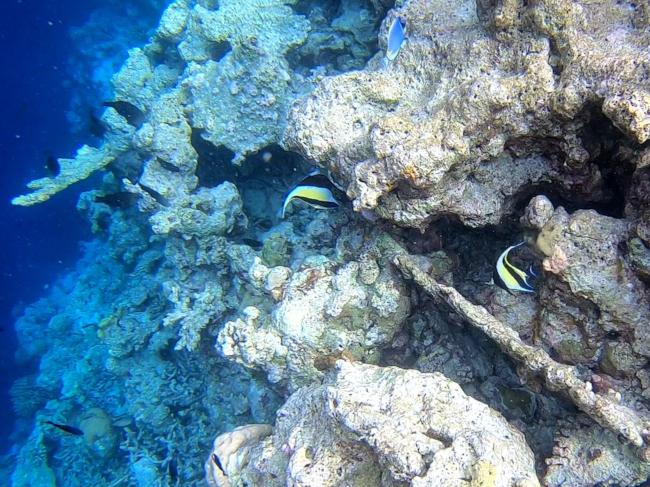 1nWimpelfische