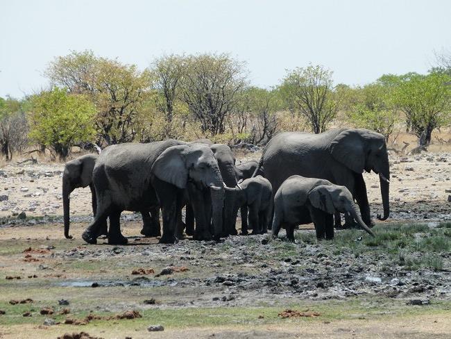 7jelefanten