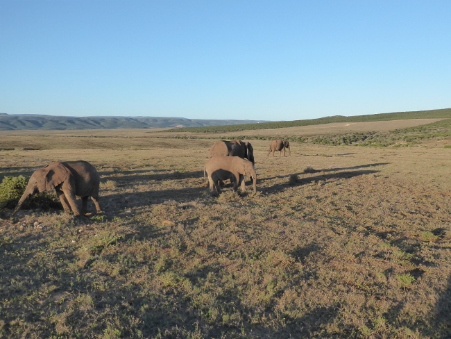 13a16AddoElephantPark