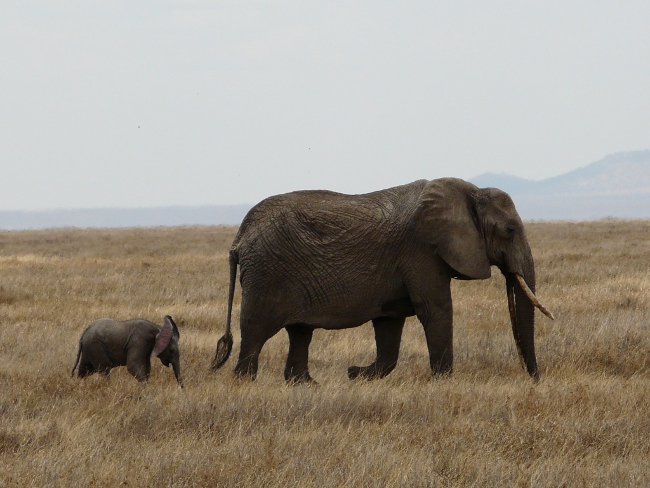 04elefanten