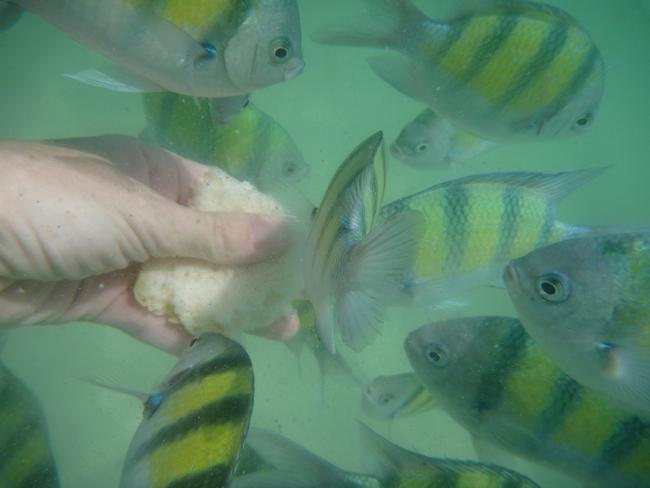 9tfischehandfuettern
