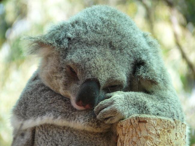 AUSTRALIEN 🇦🇺